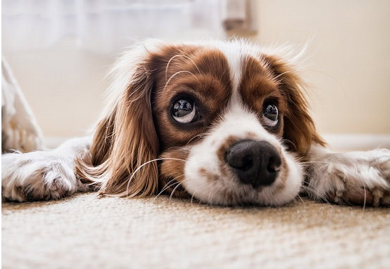 Tips for Dog Owners Moving Into a New Home