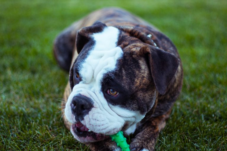 4 Things That Can Help Prevent Common Doggie Disasters at Home